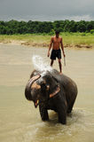 Elephant bath, NP Chitwan, Nepal Stock Photos