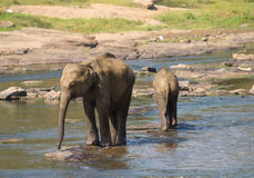 Elephant bath in the river Stock Photo