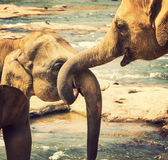 Elephant bath in river Royalty Free Stock Photography