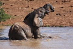 Elephant Bathing Royalty Free Stock Image