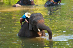 Elephant Bathing Royalty Free Stock Photography