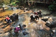 Elephant bathing Royalty Free Stock Image