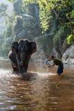 Elephant bathing. Kanchanaburi, Thailand - February 27, 2011: Unidentified man baths his elephant in the river Stock Photo