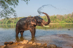Elephant bathing, Kerala, India. Cute elephant bathing, Kerala, India royalty free stock photography