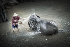 Elephant Bathing At Maesa Elephant Camp stock photography