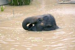Elephant bathing Royalty Free Stock Photos