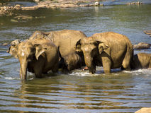 Elephant bathing at the orphanage Royalty Free Stock Photo