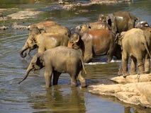 Elephant bathing at the orphanage Stock Photo