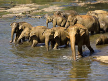 Elephant bathing at the orphanage Royalty Free Stock Photos