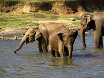 Elephant bathing at the orphanage Stock Images