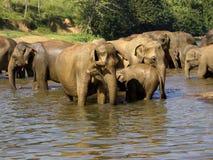 Elephant bathing at the orphanage Stock Photos