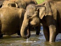 Elephant bathing at the orphanage Royalty Free Stock Photo
