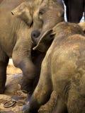 Elephant bathing at the orphanage Royalty Free Stock Photography