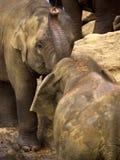 Elephant bathing at the orphanage Royalty Free Stock Images