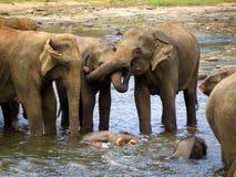 Elephant bathing at the orphanage Royalty Free Stock Image