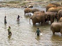 Elephant bathing at the orphanage Stock Images