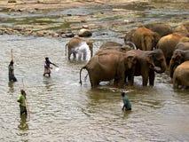 Elephant bathing at the orphanage Royalty Free Stock Photos