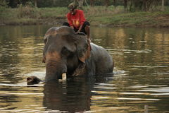 Elephant bathing in the river with its handler in the sunrise Stock Photo