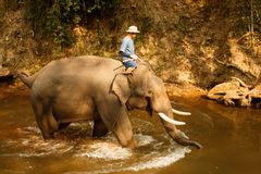 Elephant bathing in the river - Thailand-3