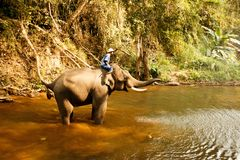 Elephant bathing in the river - Thailand-5