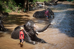 Elephant bathing in the river Royalty Free Stock Image