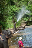 Elephant bathing in the river Royalty Free Stock Photo