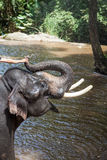 Elephant bathing in the river Stock Image