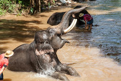 Elephant bathing in the river Stock Photo