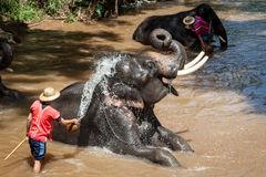 Elephant bathing in the river Royalty Free Stock Photography