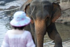 Elephant bathing in water
