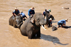 Elephant bathtime. A group of people helping elephant taking bath in the river, thailand Royalty Free Stock Image