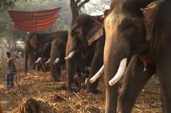 Elephant Bazaar Royalty Free Stock Images