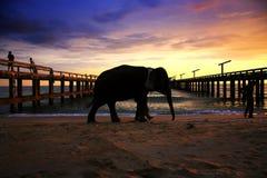 Elephant on the beach Royalty Free Stock Photo