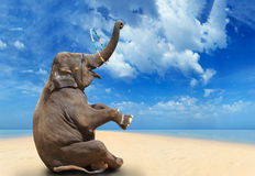 Elephant on the beach Royalty Free Stock Photos