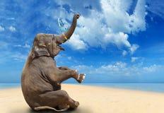 Elephant on the beach. Elephant having fun on the beach Royalty Free Stock Photos