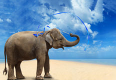 Elephant on the beach Royalty Free Stock Photography