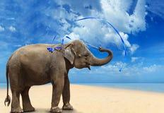 Elephant on the beach Royalty Free Stock Photography