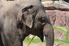 Elephant. A beautiful maitre arch Elephant stock photos