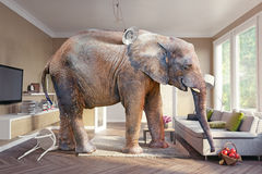 Elephant and the beer Royalty Free Stock Photography