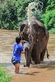 Elephant being bathed by its handler Royalty Free Stock Photography