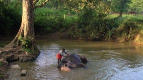 Elephant being washed by handler in pool, Sigiriya stock video footage