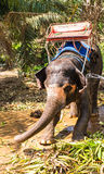 Elephant with bench on his back in the tropics Stock Images