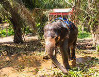 Elephant with bench on his back in the tropics Stock Photo
