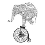 Elephant on bicycle. Stylized patterned elephant on vintage bicycle royalty free illustration