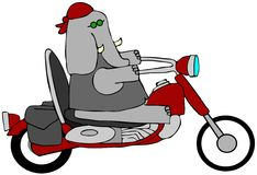 Elephant Biker Stock Images