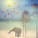 Elephant, birds, palm silhouette on sunny sky and Stock Images
