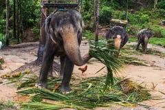 Elephant, bishop, jumbo Royalty Free Stock Images