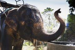 Elephant, bishop, jumbo Royalty Free Stock Photography