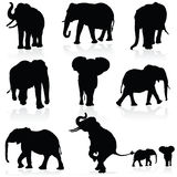 Elephant black art  black silhouette Royalty Free Stock Photography
