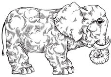 Elephant black and white drawing. Royalty Free Stock Images